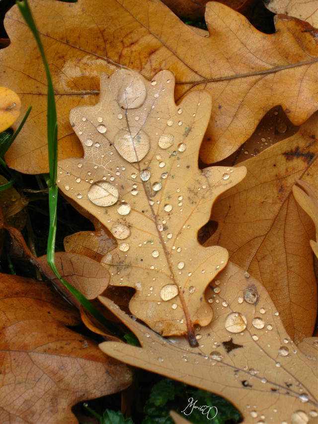 Re-post, my second entry for #WAPAutumn #leaves #fall   #emotions #nature #photography