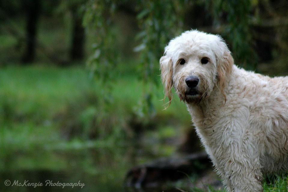 #nature #petsandanimals #photography #dog