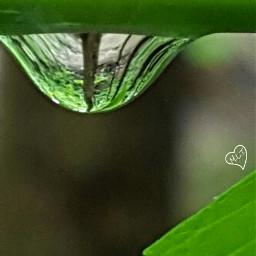 macro unedited forest raindrop nature