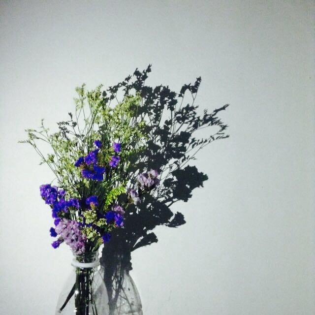 #shadow #flowers #interesting #funny #beautiful