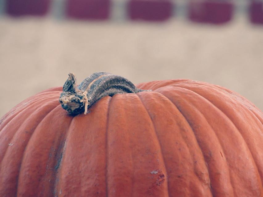 #pumpkin #Halloween
