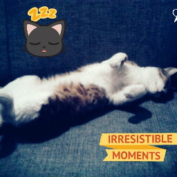 cat happy sleep dreams