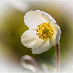 vignette flower nature naturephotography