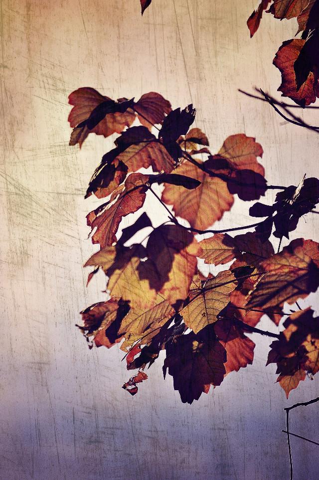 Golden Leaves: Picsart FEATURED IMAGE 11/10/15 #interesting #art #nature #naturelover #naturelovers #photo #photography #creative #recent #explore #landscape #landscaping #landscapes #season #seasons #scene #scenes #scenery #naturephotography #leaves #leaf #featured #featuredphoto #featuredphotos #featuredimages #featuredimage