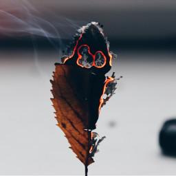 leaf leafs love burn fall