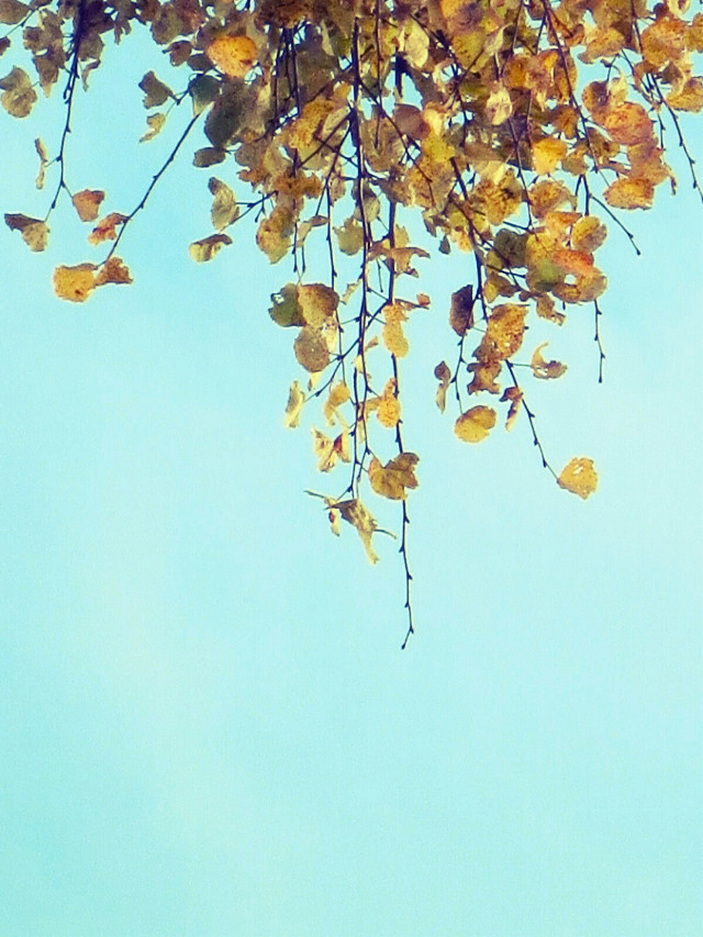 Sometimes it's better to see something upside down.    #photography  #pastel #colorful  #autumn  #nature  #upsidedown