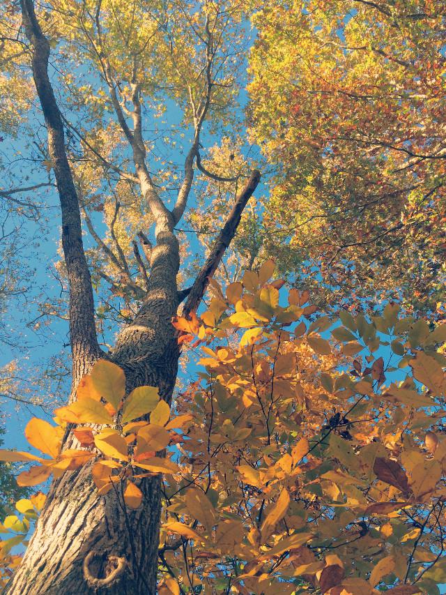 #fall #autumn #lightcross #trees #leaves #woods #hike #sunlight