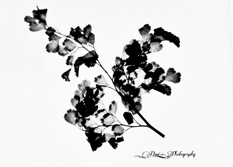 #freetoedit #blackandwhite #nature #flower #photography #emotions #love