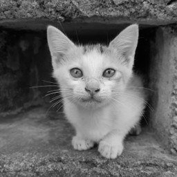 blackandwhite cute photography vintage fun