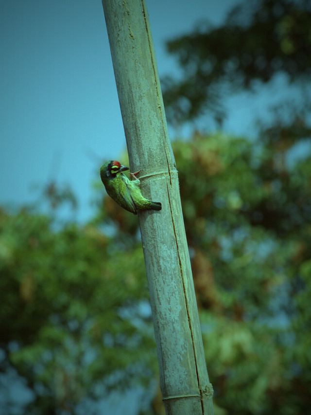 #photography  #lomoeffect  #nature  #bird