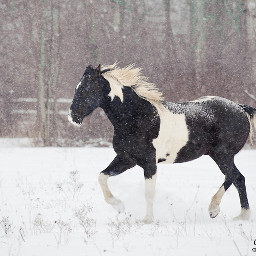 blackonwhite