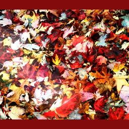 fall dailytag autumn leavs colorful
