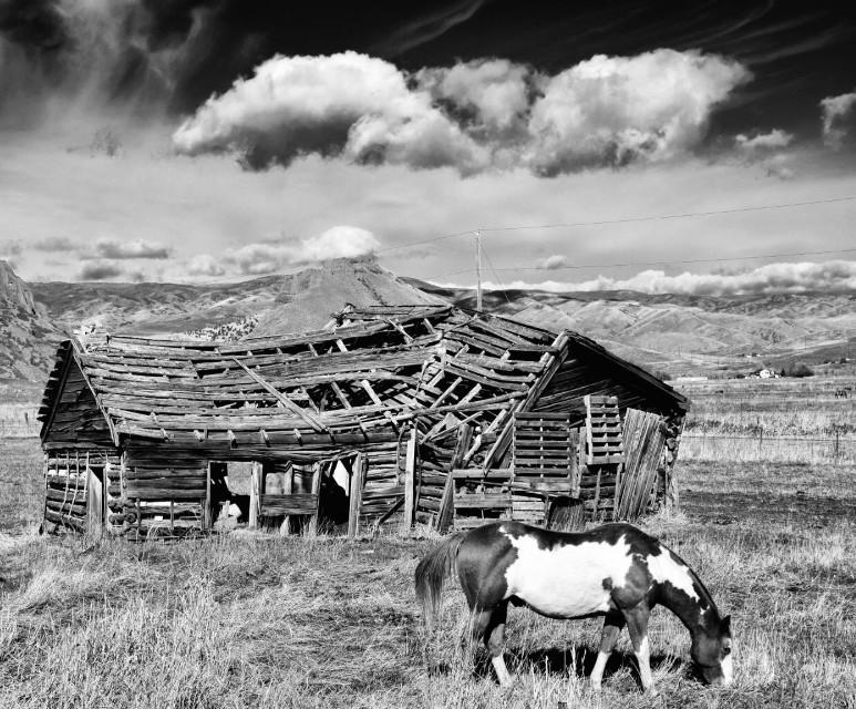 Open Range #blackandwhite#art #landscape#freetoedit