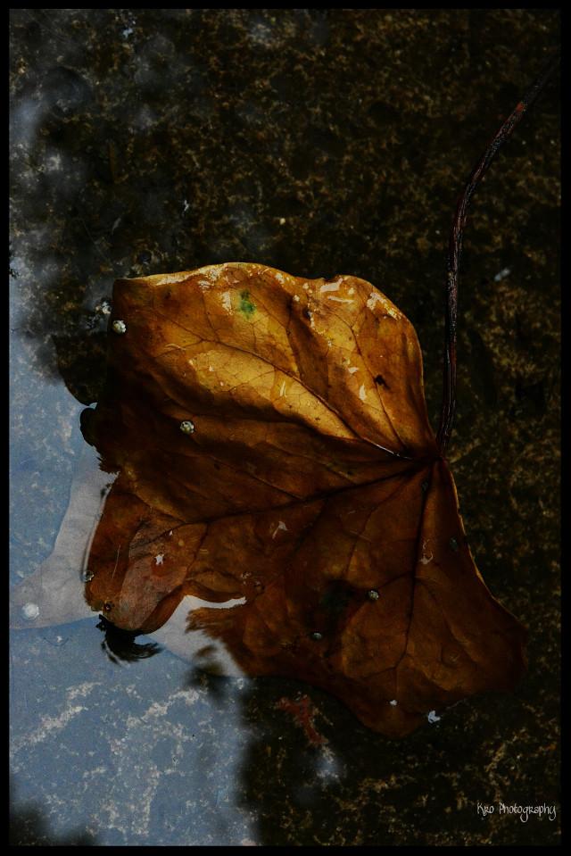 #nature  #oldphoto #love #bokeh #photography  #wppfallcolors