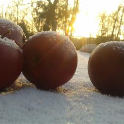 apple sun autumn cold
