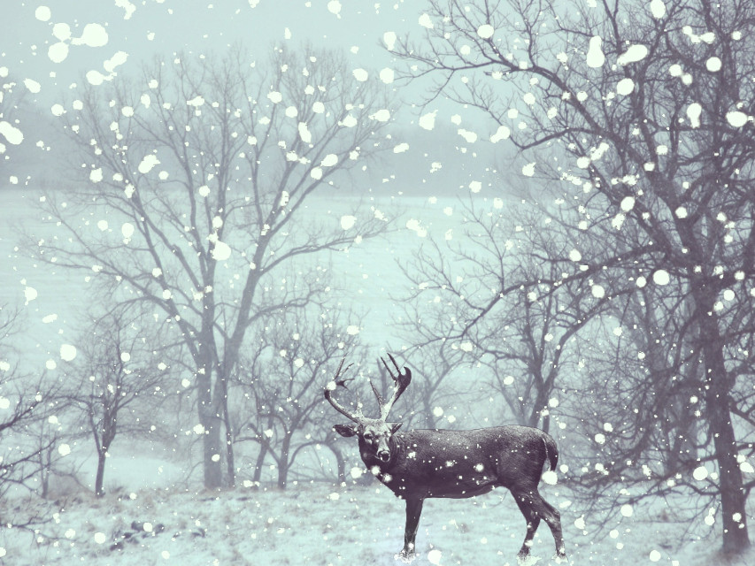 For my love with deers !!! ❤❤❤❤  #cold #surreal #snowfall