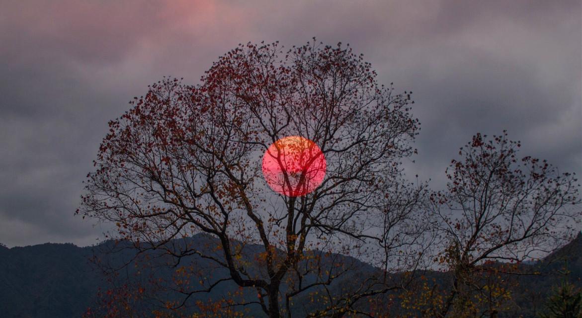 #landscape #sunset #mount # #tree