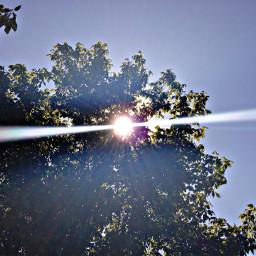 tree green sky sun bright