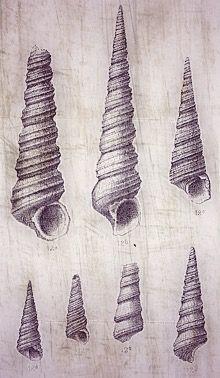 art shells drawing newtattoo tatoo