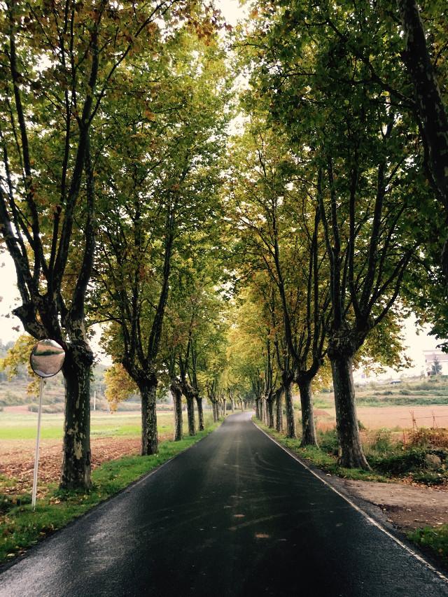 #roads #autumn