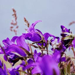 photography flower purple nature