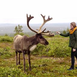 photography christmas reindeer deer nature
