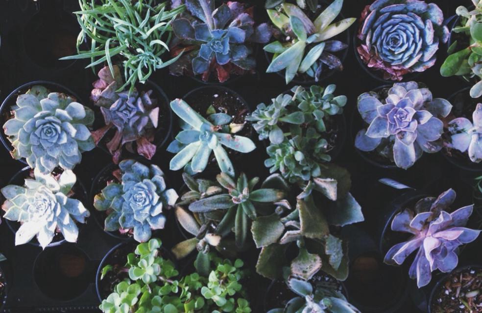 #succulents #aesthetic #grunge #tumblr