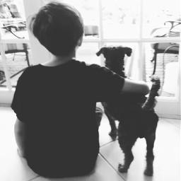 dog petsandanimals rescuedog adoptdontshop blackandwhite