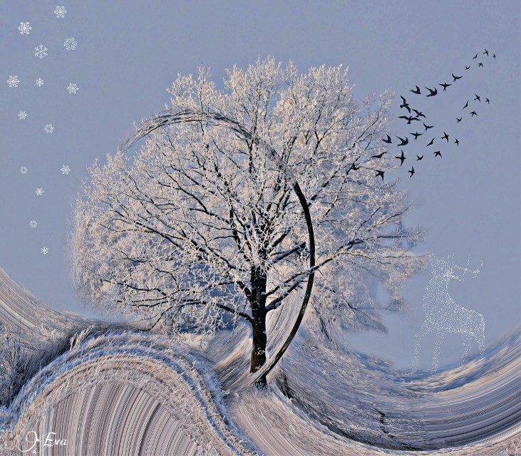 #wapwinterwonderland #swirleffect #clipart #swirled #tree #winter #editstepbystep #swirl #madewithpicsart