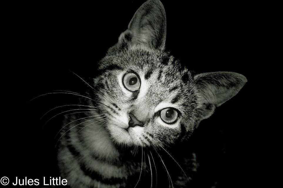 #photography #myphotography #myphoto #cat #pets&animals
