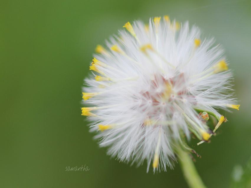 #photography #nature #macro #closeup #flower #winter