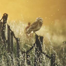 nature petsandanimals photography