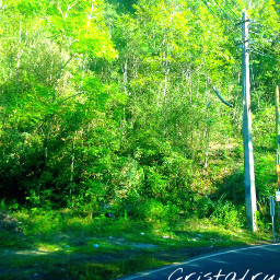 art forestgreen photography nature puertorico