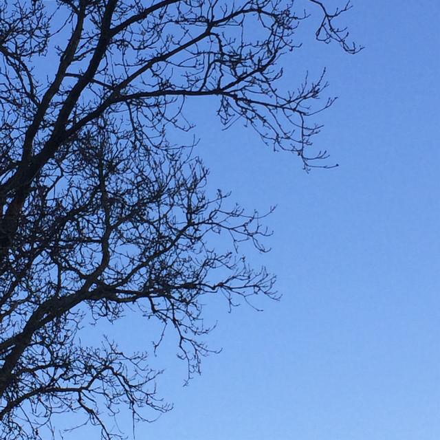 #tree 🌳
