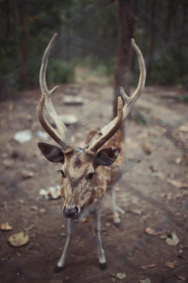 oh my deer😊  #nature  #bokeh #petsandanimals  #photography #wild