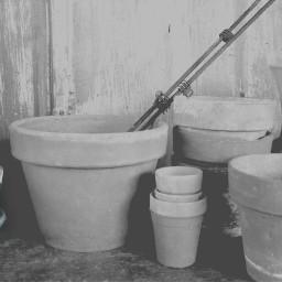 dailyinspiration grey flowerpots flower photography