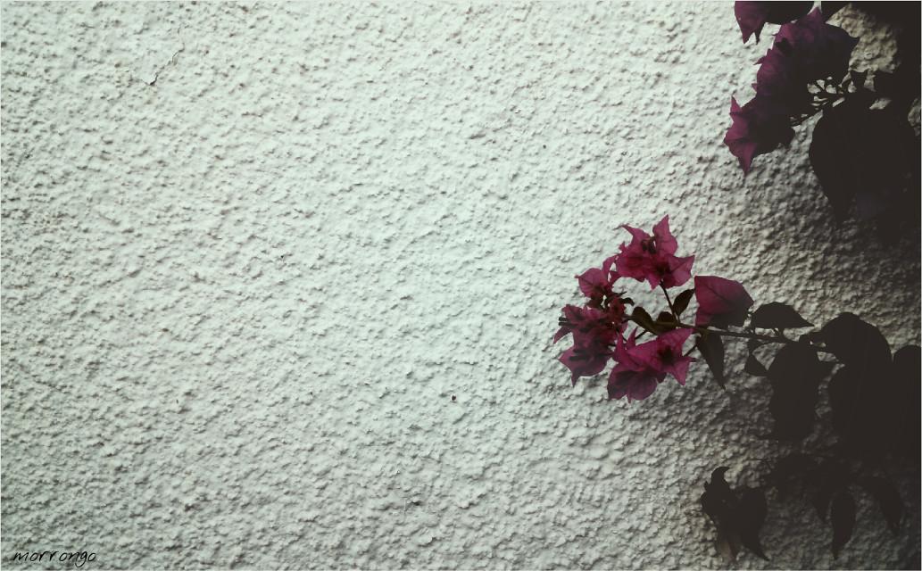 #dreamy #freetoedit #flower #photography #artistic #dramaeffect #white #mygarden