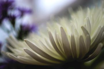 macro macro_flower macro_lens flower flowers