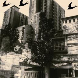 building sky bird awesome freetoedit