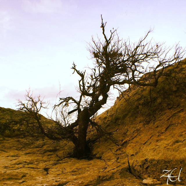 #photography #tree #sky #landscape