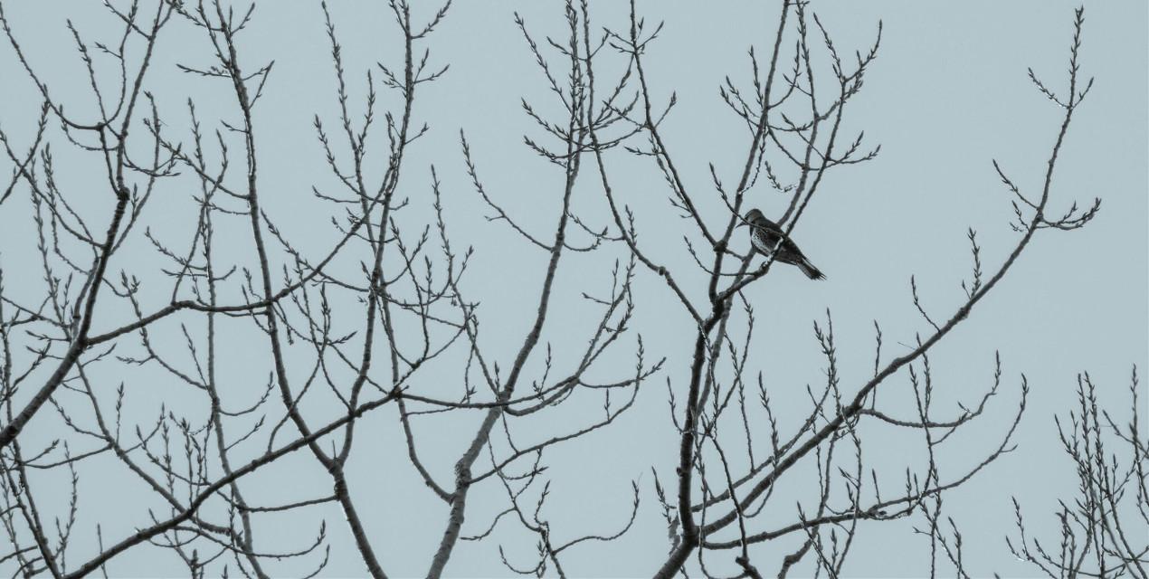 Observer #Minimal  #bird  #nature  #tree  #cute  #winter  #pretty  #wildlife  #petsandanimals  #travel  #kansascity  #photography  #artistic