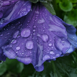 wppwaterdrops photography flower colorful