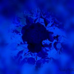 softfocus flower blueeffect photography