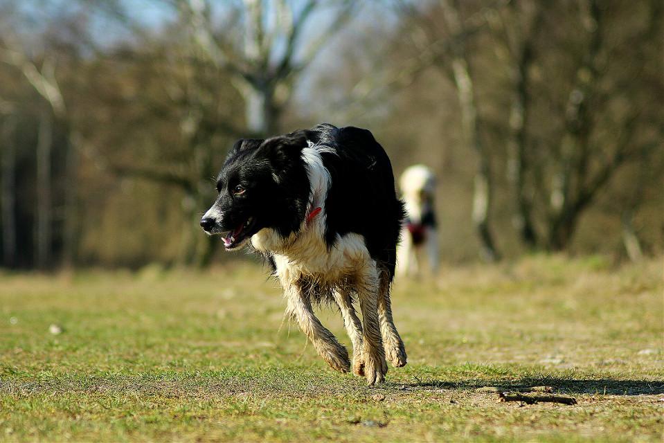 #nature #petsandanimals #photography #dog #bordercollie