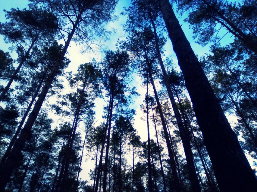 #photography  #forest