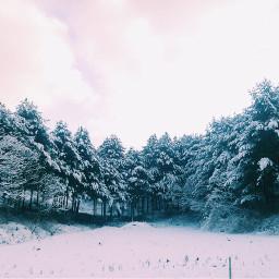 nature winter snow tree mountain