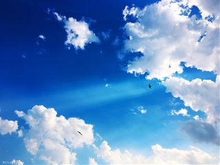 sky clouds cloudysky birds crows flying inflight sunlight photography nature