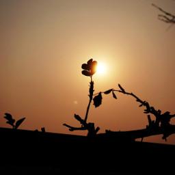emotions nature sunset spring
