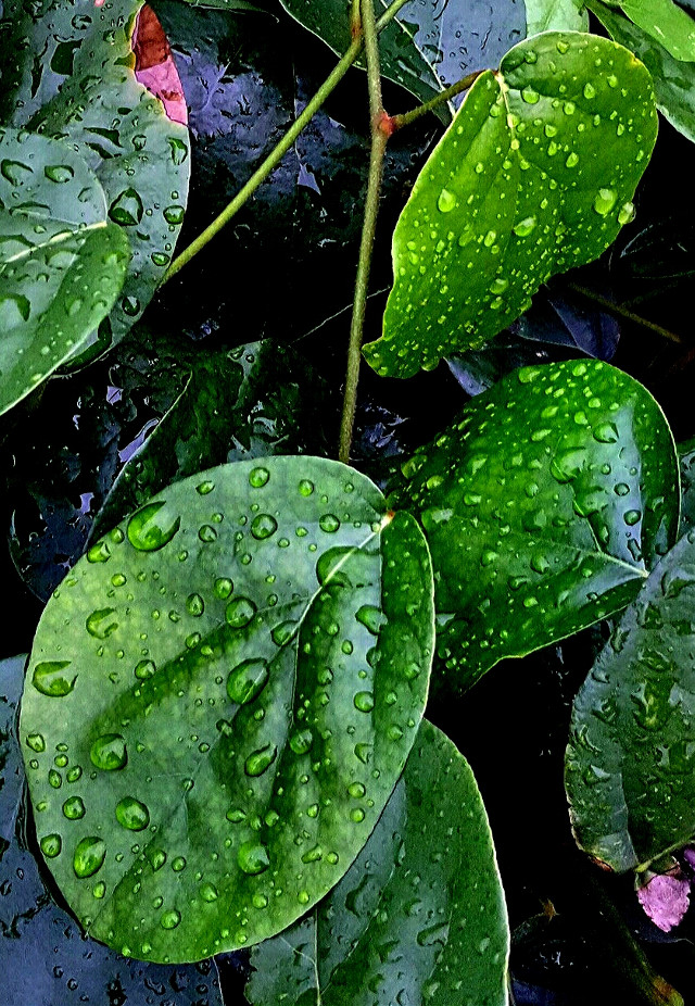 #nature  #leaves  #raindrops