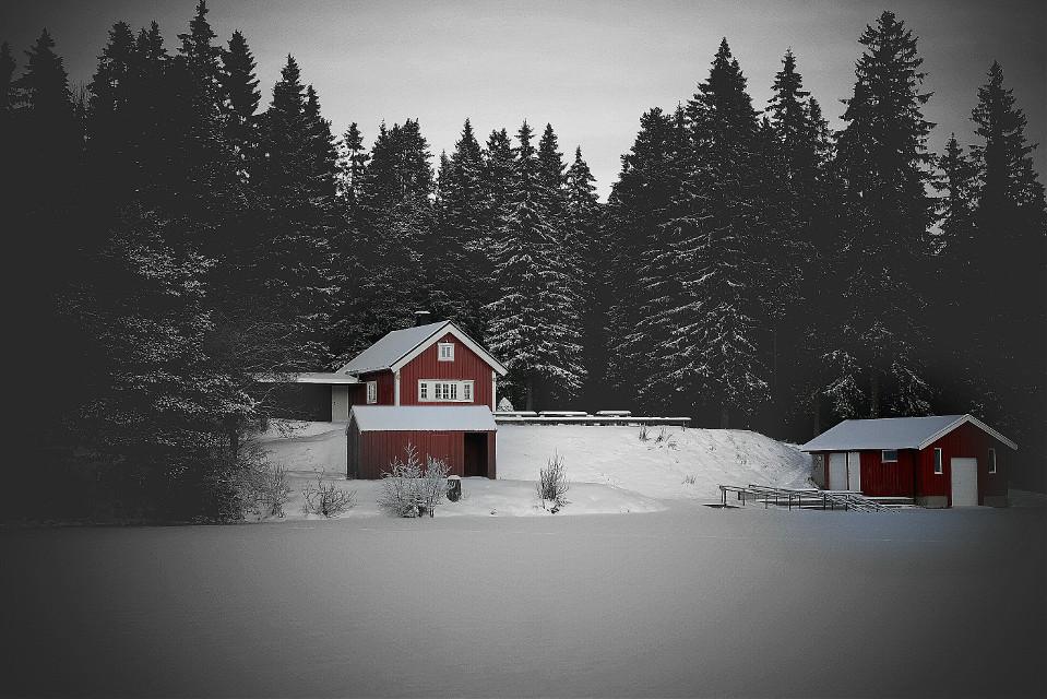 #colorsplash  #winter  #snow  #nature